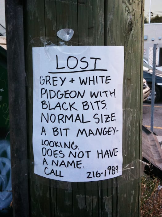Lost Grey + White Pidgeon with black bits.  Normal size.  A bit mangey-looking.  Does not have a name.  Call (403) 216-1989
